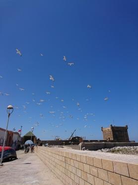 Möwen stehen im Wind in Richtung Hafen